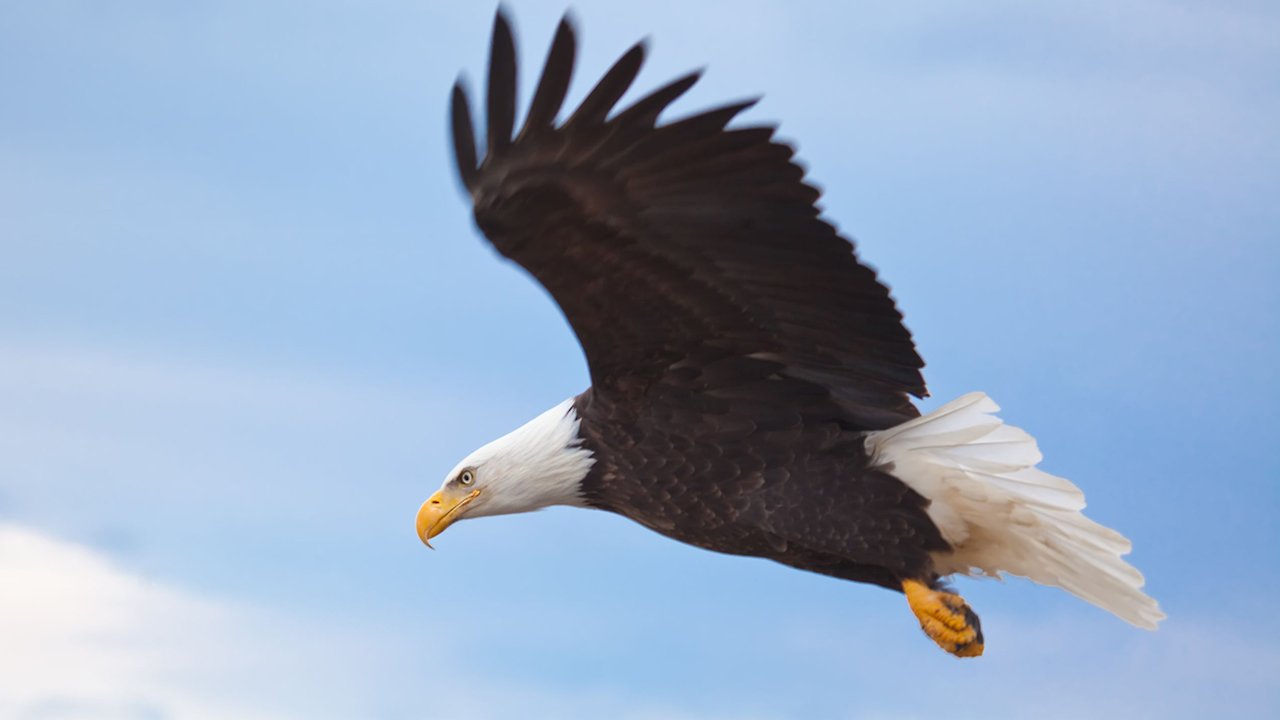 Adler 1280x720